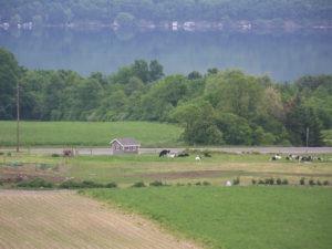 About Shtayburne Farm